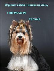 Стрижка,  тримминг собак и кошек на дому