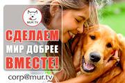 Животным помощь,  информационная поддержка